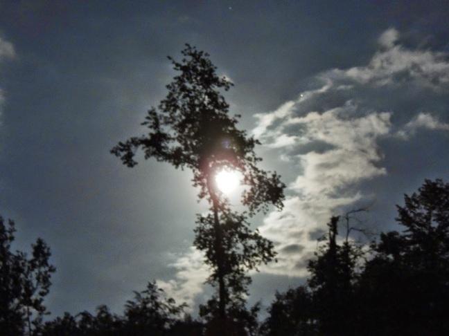 lluna arbre drac